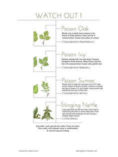 Watch Out! How to Spot Poison Plants