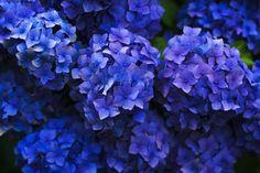flowers, garden, nature, blue, purple