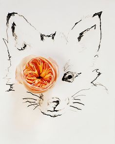 Original Signed Fine Art Photograph    Size: 8 x 10 inches    No. 9893 fox and flower    Please check my policy page for more sizes and canvas options.