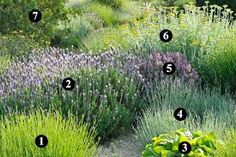 Resultado de imagen para jardines que necesitan poca agua