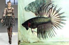 Fish-Inspired Fashion: Siamese Fighting Fish Dresses at Rodarte Fish Fashion, Siamese Fighting Fish, Iris Van Herpen, Exotic Fish, Fish Design, High Art, Fashion Images, Fashion Ideas, Fashion Design