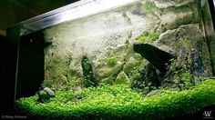 PHILIPP DÖRBAUM For info about this aquascape and to give it a rating click the link in our profile!