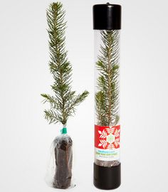 White Elephant Gifts Christmas Tree in a Tube.\nThis Christmas Tree in a Tube White Elephant Christmas, White Elephant Gifts, Elephant Party, Free Gifts, Diy Gifts, Christmas Holidays, Christmas Tree, Ugly Sweater Party, Joy To The World