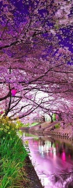 Travel Inspiration for Japan - Cherry Blossoms Festival in Japan