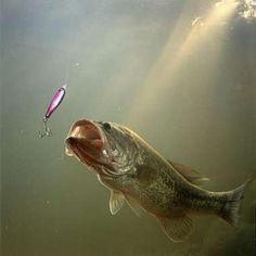 Fishing lure Love bass fishing http://letscatchreelbigfish.blogspot.com