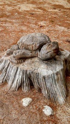 Turtle carving art in Maine Wildlife Park, Gray, ME Резьба По Дереву, Пиломатериалы, Резьба По Дереву, Рыбы, Бензопилы, Черепахи, Деревянные Духовые Музыкальные Инструменты