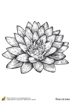 tatouage fleur: vector set of hand drawn fleur de lotus. lily
