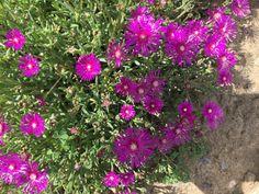 Imagen de http://0.tqn.com/d/bodas/1/0/n/3/-/-/02-Flores-Particulares-al-Verano---Alstroemeria.jpg.