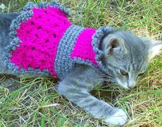 crocheted dog sweater dog dress cat sweater cat dress. $20.00, via Etsy.