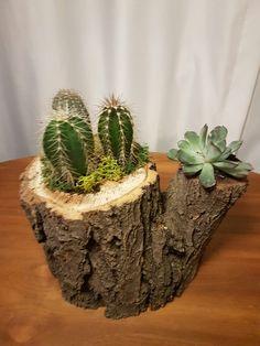 Cactus and Succulents- Cactus y Suculentas Cactus and Succulents - Garden Yard Ideas, Garden Crafts, Garden Projects, Garden Art, Garden Design, Cacti And Succulents, Planting Succulents, Cactus Plants, Cactus Types