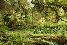 external image rainforest.jpg