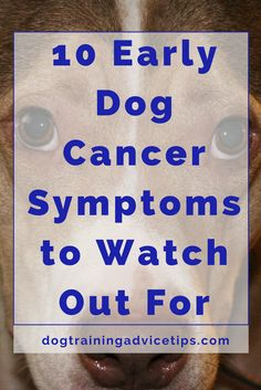 10 Early Dog Cancer Symptoms to Watch Out For | Dog Health Warning Signs | Dog Health Tips | Dog Health care | http://www.dogtrainingadvicetips.com/10-early-dog-cancer-symptoms-watch