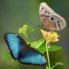 BLUE MORPHO BUTTERFLIES -- Available in various prints & greeting cards.  | Digital art by Thanh Thuy Nguyen (4/19/2011)