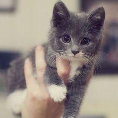 . Cutie! by instaanimal