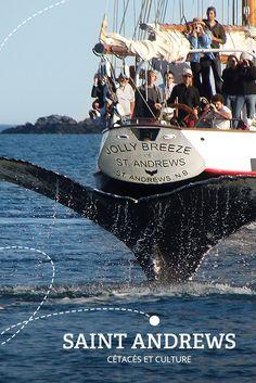 Des baleines et des îles | Arrêt no 4 - SAINT ANDREWS : À la fois centre de villégiature, d'aventure et d'observation de baleines, la ville de Saint Andrews se dresse sur une péninsule dans la baie de Fundy.