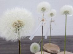 """real dandelion as decoration the wonderful dandelions can easily be made """"durable"""". And then the ball """"lasts forever"""" and the se Diy Décoration, Diy Crafts, Spring Art, Small Gardens, Decoration, Art Lessons, Mother Nature, Most Beautiful Pictures, Flowers"""