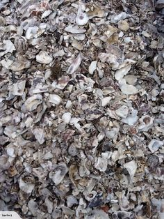 We Have Crushed Oyster Shell Which Is Ideal For Driveways