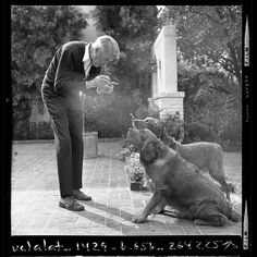 jimmy stewart playing ball with his dogs