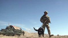 """#Army #Adopting Out Soldiers"""" Military Dogs Without Contacting Them...""""Hollow Promises From Our #Govt""""..."""