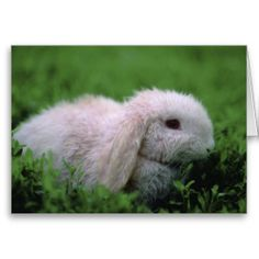 A National Geographic photograph of a cute, adorable bunny, dyed pink for Easter, sitting in the grass.