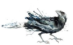 Black Crow I by ~amwah on deviantART  i like the splashy look, but would want to draw the face different