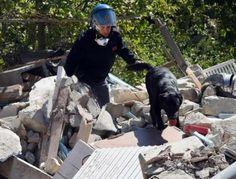 Terremoto, i cani da soccorso che salvano le vite umane