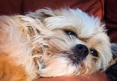 perro, mascota, amigo, relax, cansado - Fondos de Pantalla HD - professor-falken.com