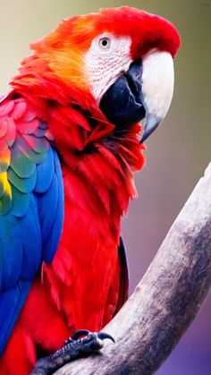 Pretty Birds, Beautiful Birds, Animals Beautiful, Animals And Pets, Cute Animals, Jungle Flowers, Beautiful Arabian Horses, Majestic Animals, Cockatoo