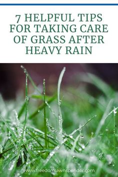 As hurricane season comes and goes, along with seasonal rain changes, one thing that takes a heavy hit is your lawn. Grass that is underwater longer than 4 days typically will not survive. How should you care and protect your grass from heavy rain? Check out these six tips to keep your lawn protected from damaging heavy rain.