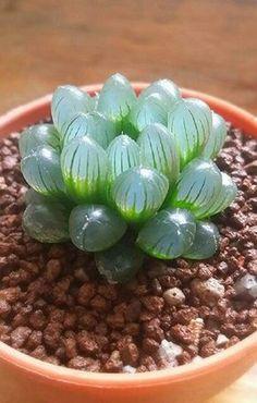 12 prachtige kamerplanten, waarvan je niet weet! Ik droom van nummer 7.