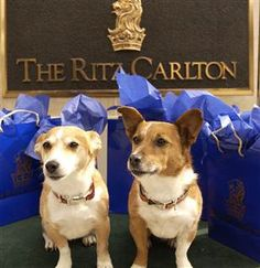 Look at these cute little pumpkins!  Many Ritz Carlton locations are pet friendly hotels.