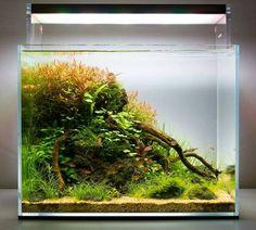 Successful Aquarium - Home to happier fish Aquarium Setup, Nano Aquarium, Aquarium Design, Aquarium Fish, Aquarium Landscape, Nature Aquarium, Planted Aquarium, Goldfish Tank, Fish Tank Design
