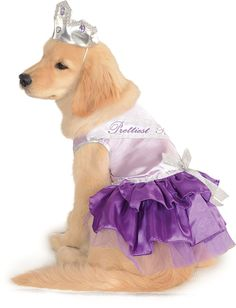 Prettiest Pooch Dog Costume >>> For more information, visit now(This is an affiliate link and I receive a commission for the sales) : Dog costumes