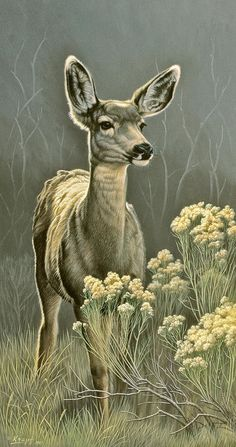 Lady Art Print by Paul Krapf. All prints are professionally printed, packaged, and shipped within 3 - 4 business days. Choose from multiple sizes and hundreds of frame and mat options. Wildlife Paintings, Wildlife Art, Deer Paintings, Vintage Paintings, Deer Skull Art, Art Institute Of Pittsburgh, Deer Drawing, Drawing Stuff, Deer Photos