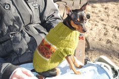 MINIATURE PINSCHER IN A SWEATER TAKE TWO.