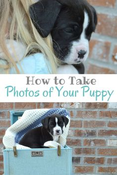 instructions on how to take care of a puppy