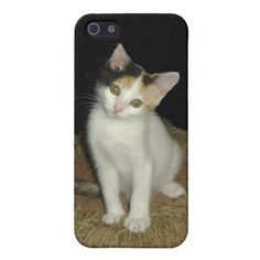 Calico Cat  iPhone 5 Covers