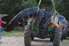 Una familia de Alabama cazó a un gigantesco caimán de más de 453 kilogramos y casi cuatro metros de largo, el más grande que haya sido capturado en esa entidad de Estados Unidos....  http://www.1502983.talkfusion.com/es/products/