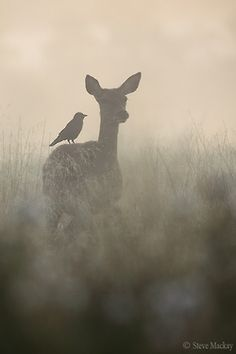 Deer and bird