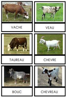 cartes de nomenclature : la ferme