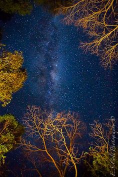 """Look overhead to see the summer Milky Way."" Photo from EarthSky.org."