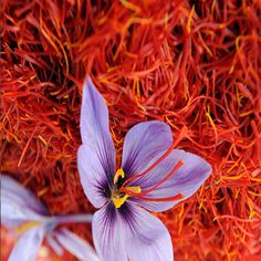 Saffron History Origin Growth Production Properties And Its Various Benefits | VeggiesInfo #Saffron #History #SaffronUses #Medicine #Healthy #Nutrition #MedicinalFacts #Benefits #Cultivation #Growth #Production #Properties #Spices #Remedies #NaturalRemedies #Veggies #VeggiesInfo Is origin of Saffron is still a mystery..? Find out here: http://veggiesinfo.com/saffron/