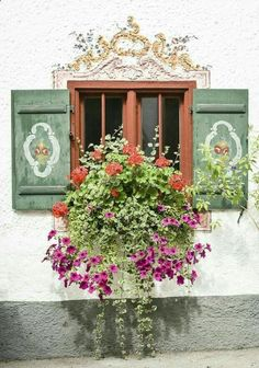 Awesome window, painted shutters, contrasting colors and gorgeous flowering window box Window Box Flowers, Window Boxes, Flower Boxes, Window Sill, Cottage Windows, Garden Windows, Old Doors, Windows And Doors, Pot Plante