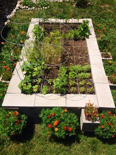 My Cinder block square foot garden 7/14