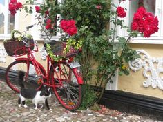 Bike and flowers in FInland