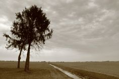 Trees on the sky Photos, Pictures, Country Roads, Trees, Sky, Paths, Heaven, Tree Structure, Heavens