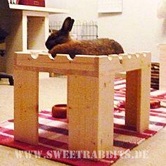 Spielzeugbewertung Kaninchen
