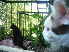 Fire Escape Catio Cats Outdoor Cats Outdoor Cat Enclosure