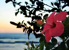 Tropical Hibiscus...my fave!