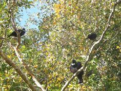 The Tui Gang Bird Feeders, Outdoor Decor, Animals, Animales, Animaux, Animal, Animais, Teacup Bird Feeders